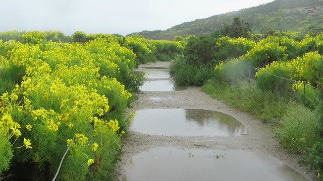 30 seconds of rain on Point Dume