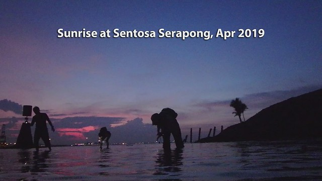 Living shores of Sentosa Serapong, Apr 2019