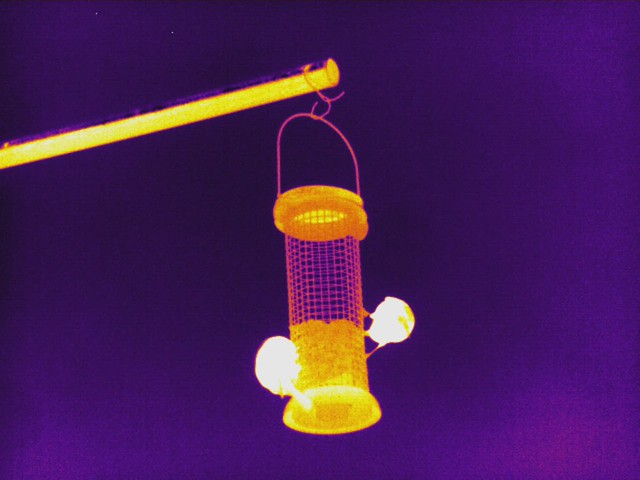 Birds feeding (Thermal video)
