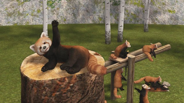 VIDEO Red Pandas by Mutresse