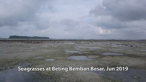 Seagrasses at Beting Bemban Besar, Jun 2019