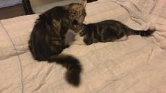 Peppy & Kewpie