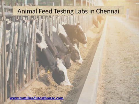 Animal Feed Testing Laboratories Chennai