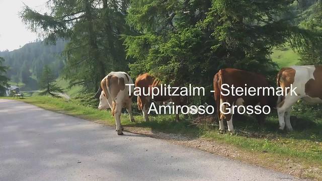 Tauplitzalm - Steiermark