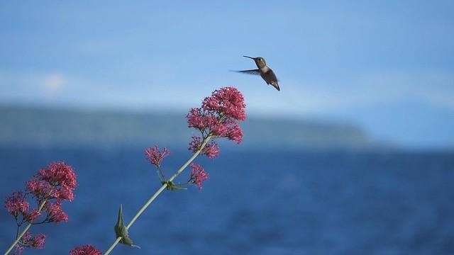 hummingbird slowmo