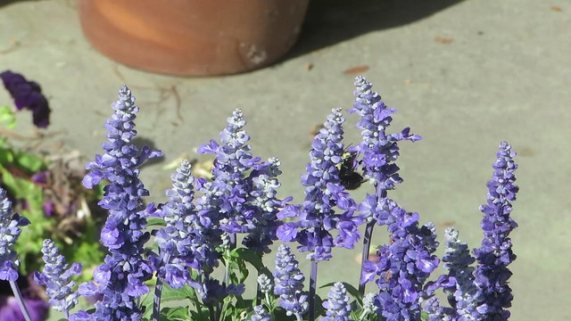 a few seconds with a bumblebee