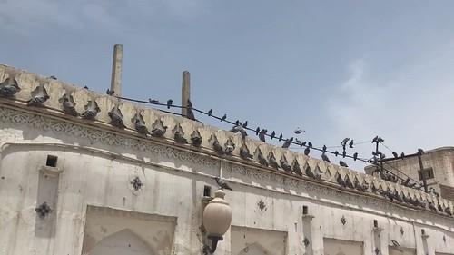 pakistan punjab multan