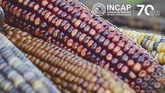 Día Mundial de la Alimentación 2019