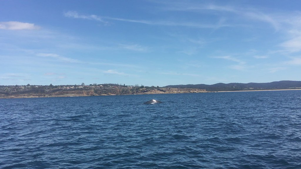 A daysail, and Kianinny Bay.