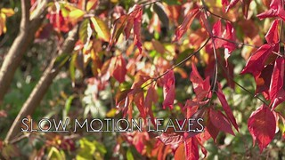 Sony RX10 HFR - Slow motion leaves