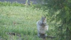 Homeless Squirrel Surveys Devastation