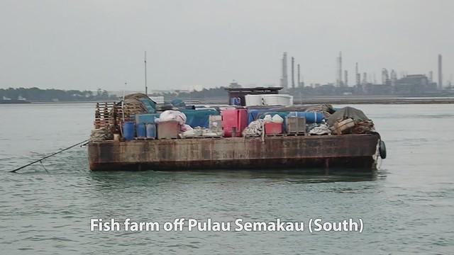 Singapore's largest fish farm, off Pulau Semakau (South)