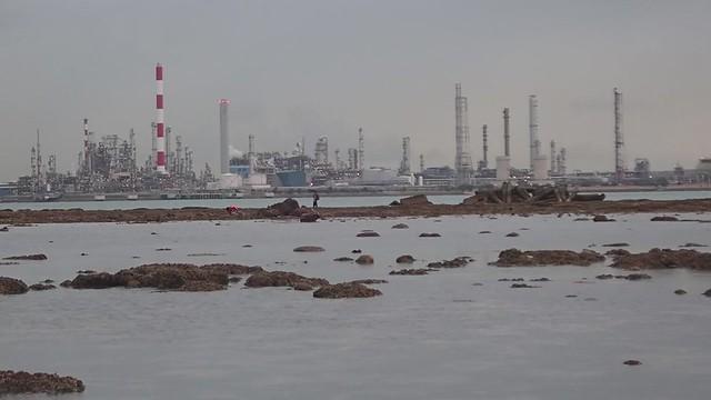 Living shores of Cyrene, Feb 2020