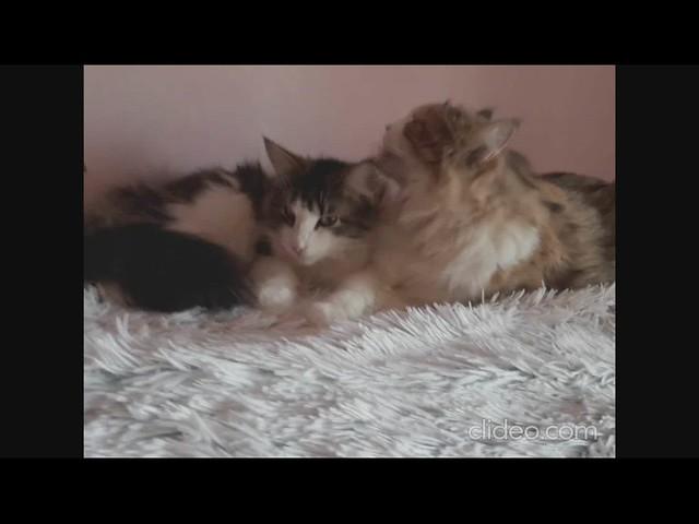 ღ Milly and Pite ღ