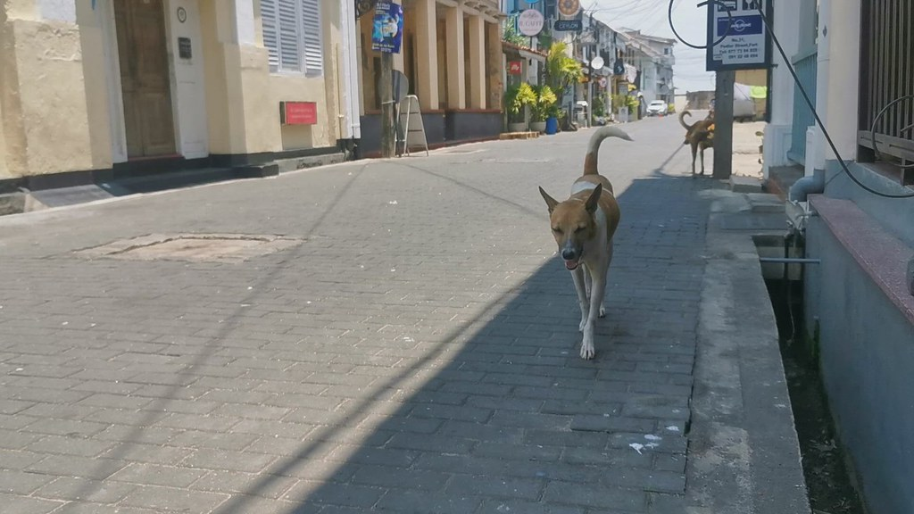 Empty streets and street dogs, Galle
