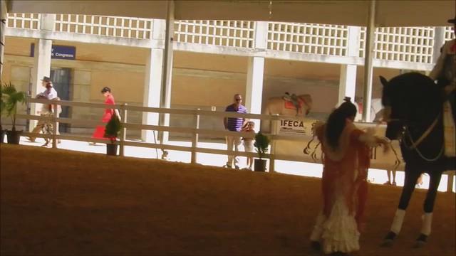 bailaora y caballo  espectaculo escuela Carmelo Cuevas Parque González Hontoria Feria del Caballo 2014 Jerez de la Frontera Cádiz video 03