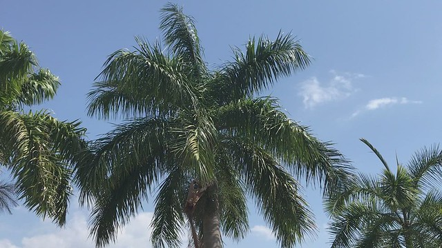 There is Nothing Like a Palm Tree Swinging in the Breeze