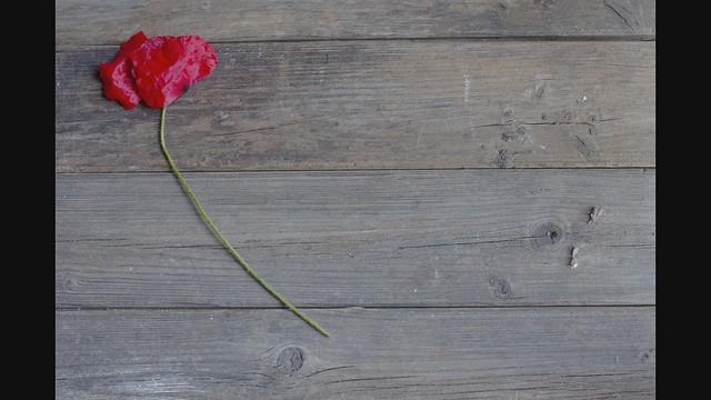 poppy petals dance