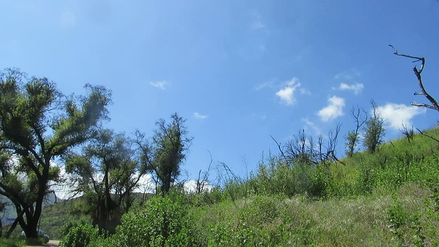 birdsong in the burn area