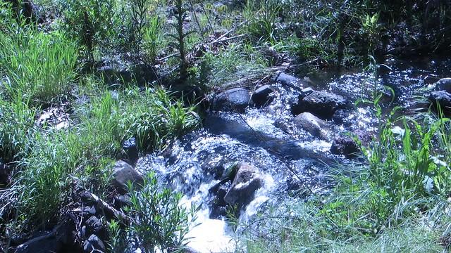 sierra creek after the rain