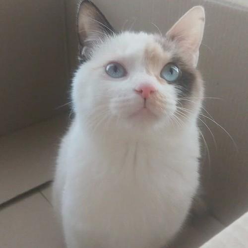 猫 in ダンボール箱