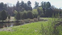 Black Creek coming into Stewarttown