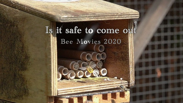 Bee Movies 3 Is it safe to come out.