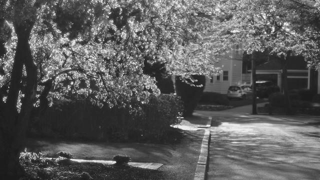 'Springtime Tranquility'