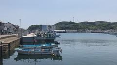 Katsumoto port squid boats