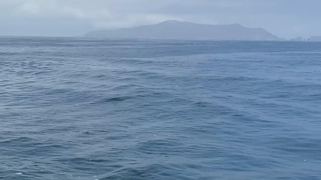 Humpback Breaching by Lotti Keen