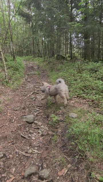 Jippy i skogen