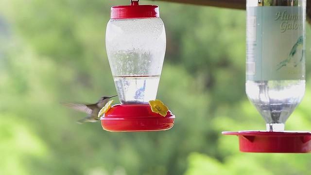 2020.06.22.02.D850 Hummingbirds in Slo-Mo