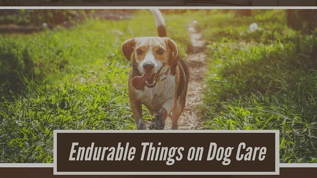 Extra Care for Your Canine Health