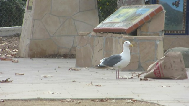 seagull goes shopping