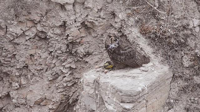 Owls just wanna have fun!