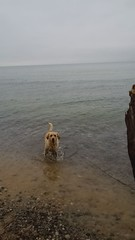 Dara loves Lake Michigan!
