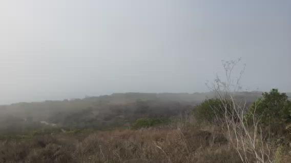fog rolls through Bluffs Park in Malibu