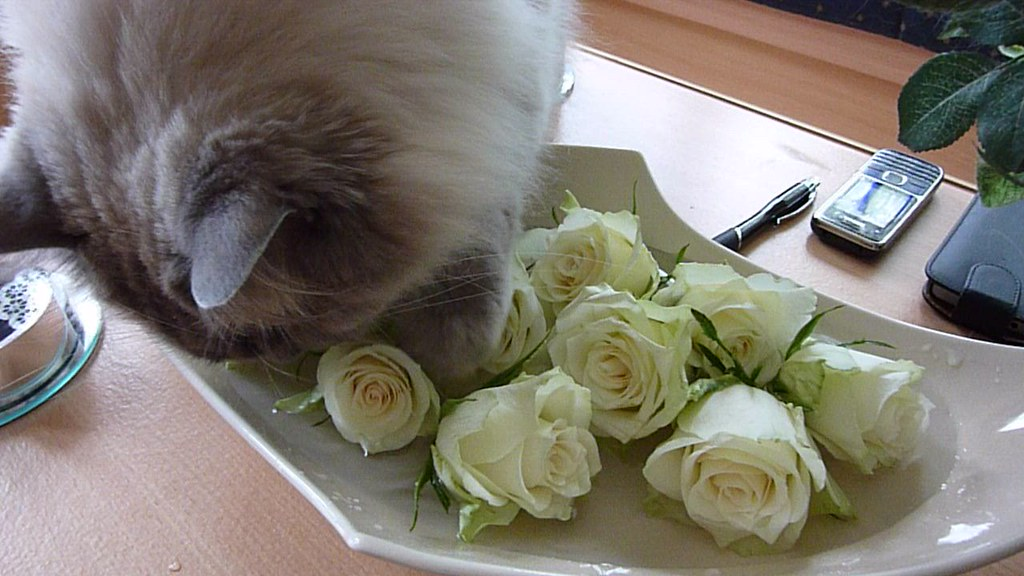 P1270901 2014 4 Juni Kyan likes Rose water