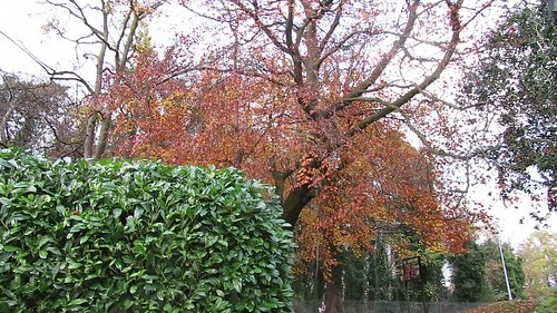 Leaves - November 10th 2020