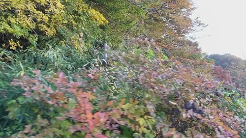 久々に散歩してみたらすっかり秋でした