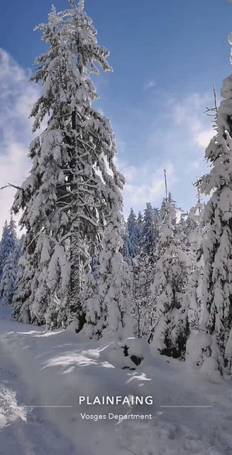 Sur une route forestière dans la La forêt du Reichsberg
