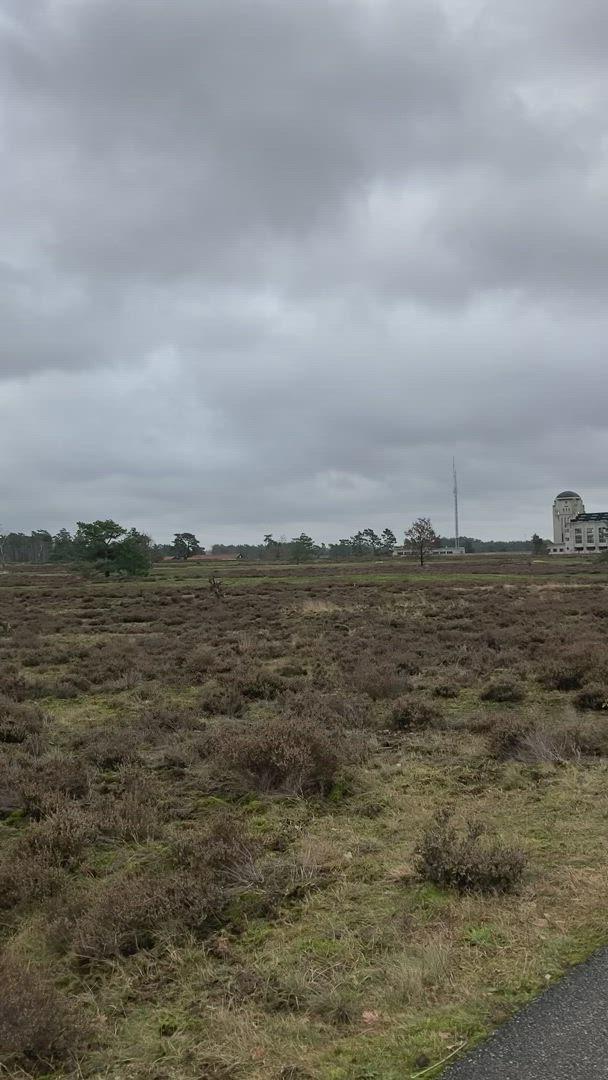 Wild zwijn bij Radio Kootwijk