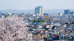 Last day in Kyoto. Cherry blossoms :cherry_blossom: and the Hankyu train :train: