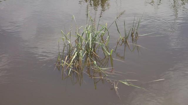 Wetlands beside the Road