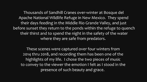 Sandhill Cranes at Sunset (video)