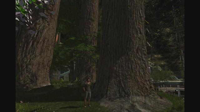 The Redwood Grove Promo Video
