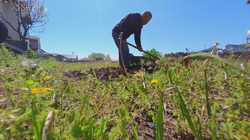 本日の農作業。この後マルチはる予定。