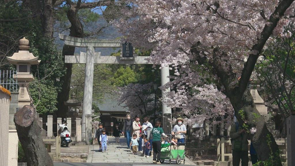 2021年神戸の桜