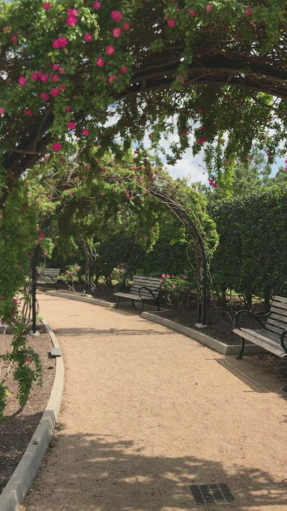 A stroll at the rose garden
