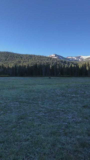 Big Meadow Bear